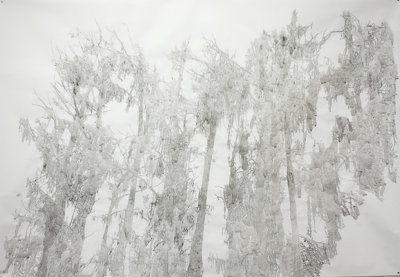 Cypress Tree Drawings Big Cypress I, Caddo