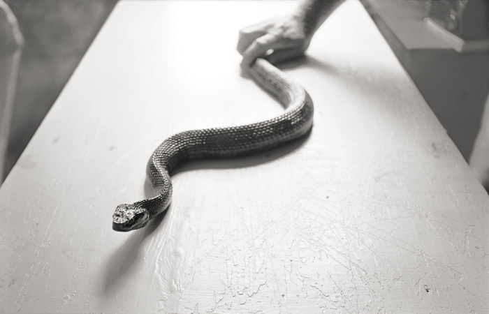 Brian Miller Cottonmouth Pigment Print