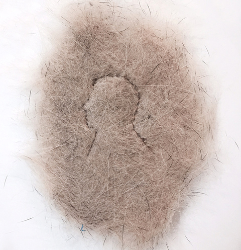 Brian Miller A Series of Minor Miracles Dog Hair, Human Hair