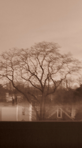 Bobby Vilinsky 2020 PHOTOGRAPHS: THE TREE OUT MY WINDOW DIGITAL PHOTOGRAPH