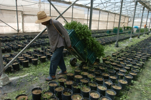 Katif Settlement Greenhouse