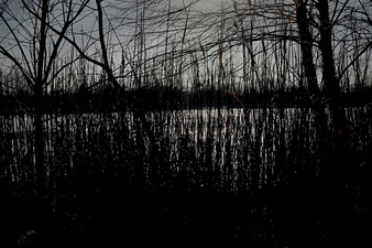 CANDACE DICARLO Winter Lakeside Archival pigment prints