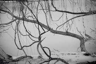 CANDACE DICARLO Winter Lakeside