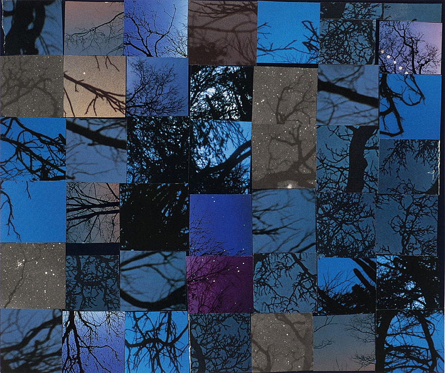 Collage Nightsky and branches