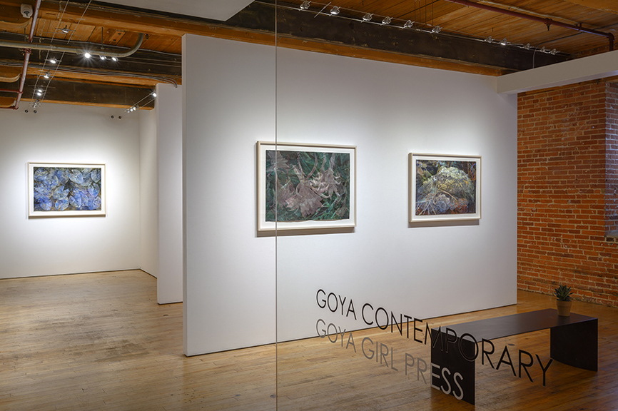 CHRISTINE NEILL Installation view of Goya Contemporary Invasive, Endangered, Beneficial 2019