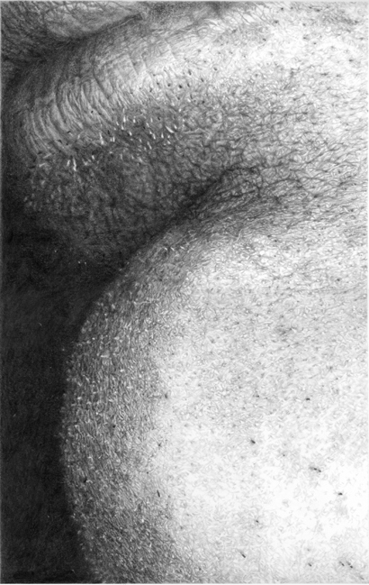 Cynthia Lin Small Drawings of Skin (2004-2006) graphite on paper