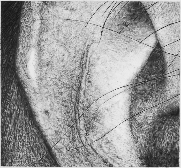 Cynthia Lin Small Drawings of Skin (2004-2006) graphite on frosted mylar