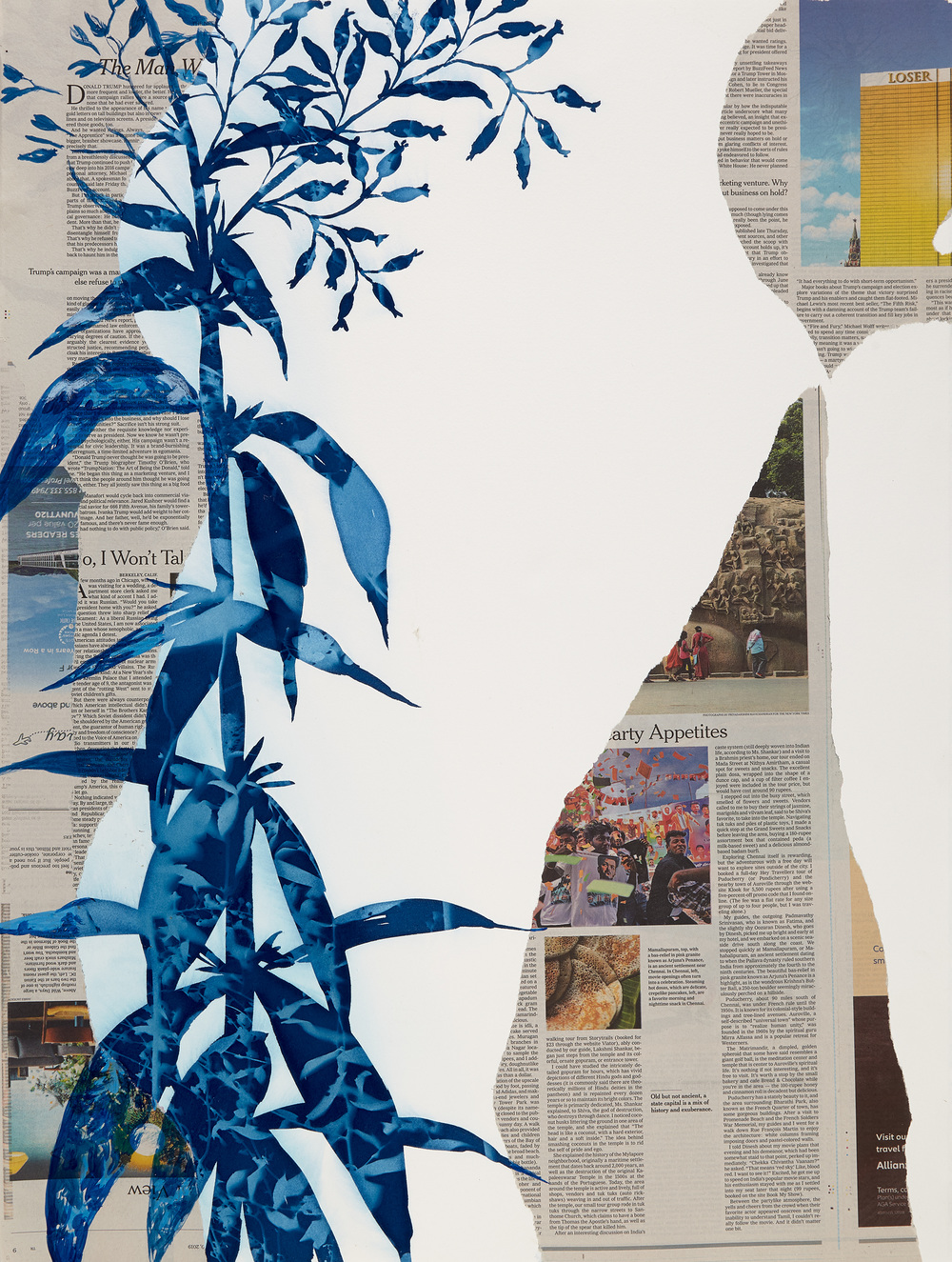 Cynthia MacCollum Ephemera Cyanotype, acrylic paint and New York Times on BFK