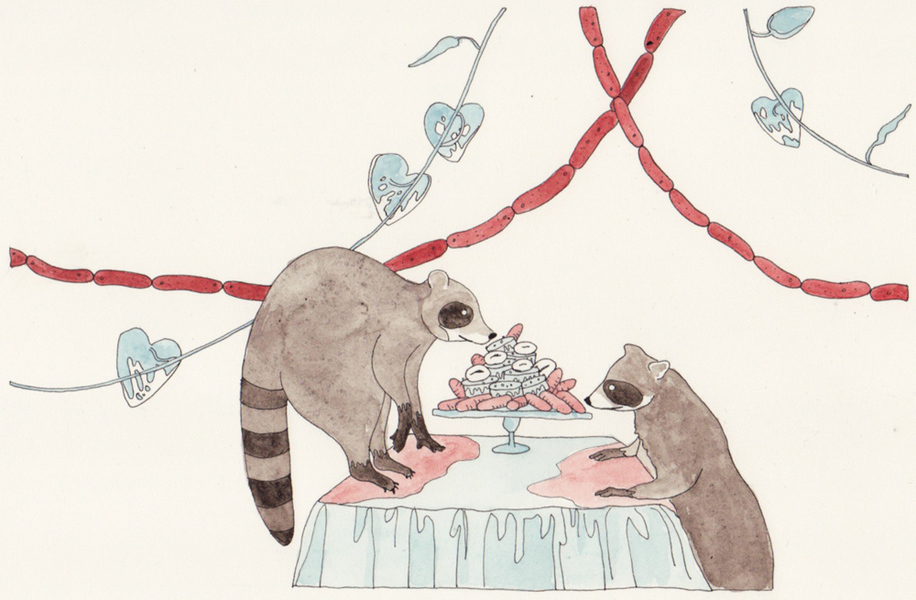 Watercolors Raccoons and Cake