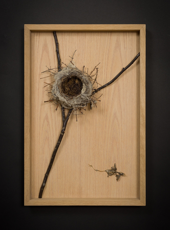 Daniel A Bruce Recent Work wood, bird's nest, dead baby bird