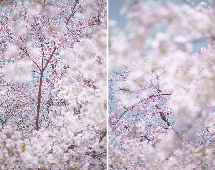 DAVID BURDENY Bloom