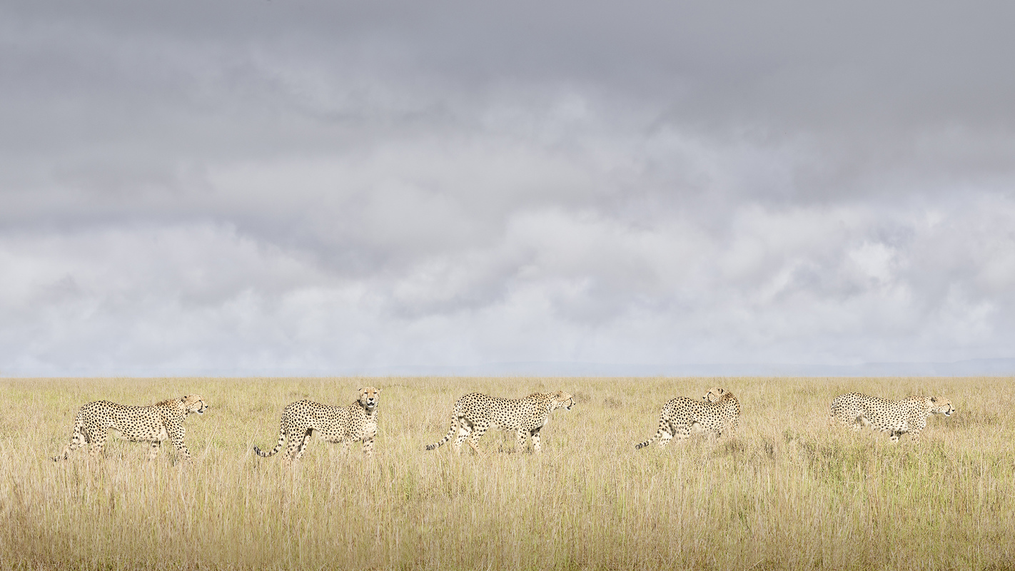 "Africa 2019 ""Before Ever After"" Cheeta Coalition, Maasai Mara, Kenya"