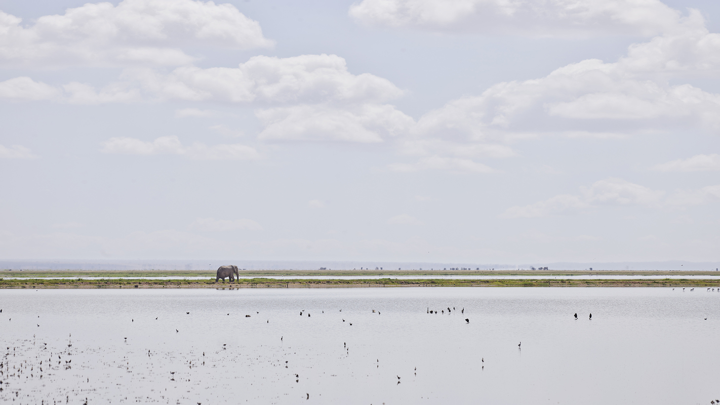 "Africa 2019 ""Before Ever After"" Elephant on the Horizon, Amboseli, Kenya"