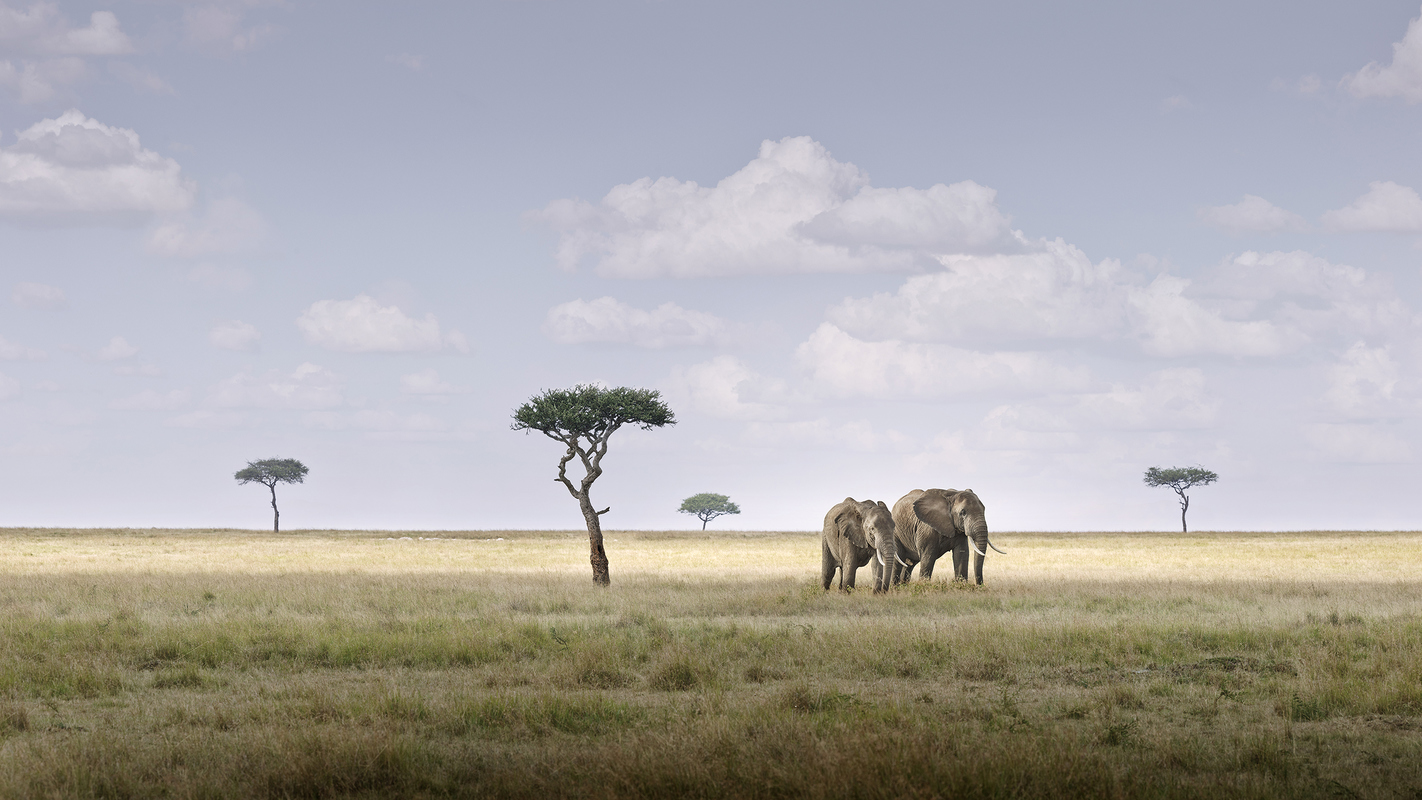 "Africa 2019 ""Before Ever After"" Elephant Pair, Amboseli, Kenya"
