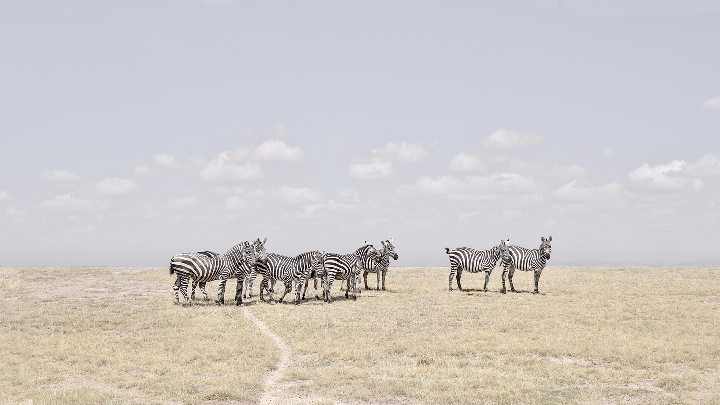 "Africa 2019 ""Before Ever After"" Zebra Plains, Maasai Mara, Kenya"