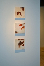 David Kidd Installations & Exhibitions Photo Encaustic