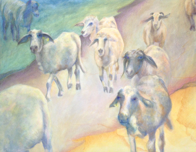 Debra Radke Sheep  Acrylic and pastel on Canvas