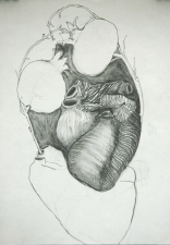 Diane Gabriel Drawings Graphite
