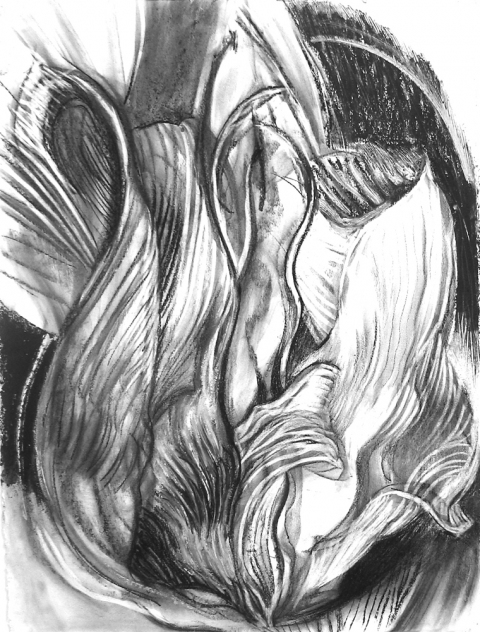 Eileen Mislove Drawings - B and W Charcoal on Paper
