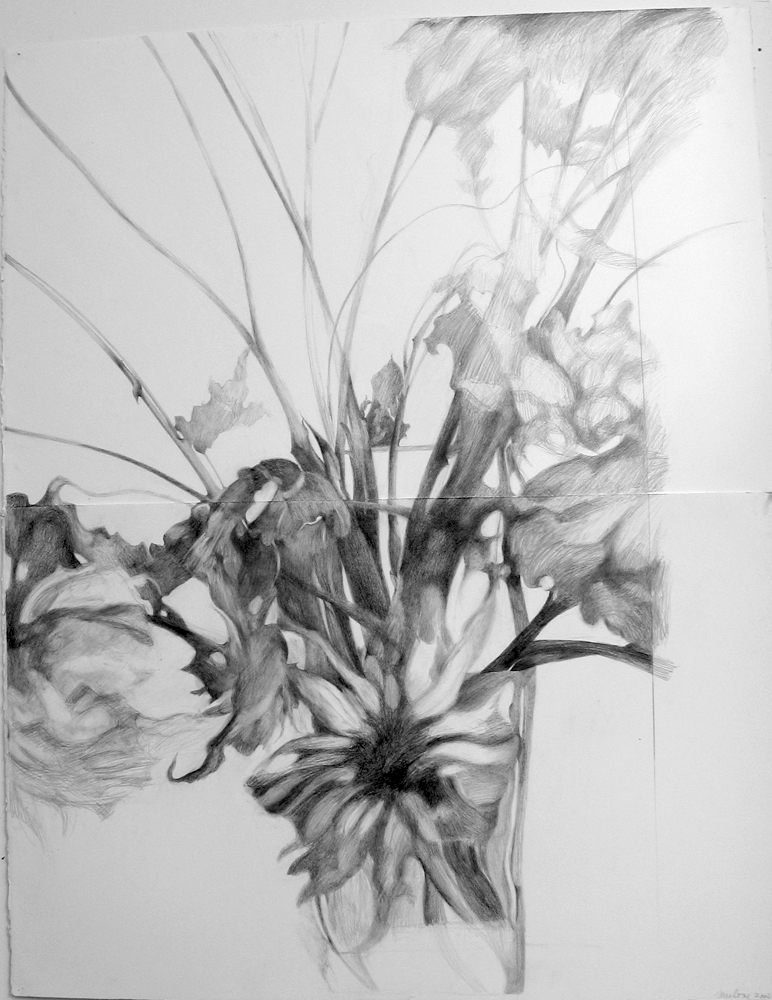 Eileen Mislove Flowers - Graphite Drawings Graphite on Paper