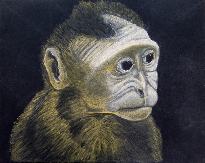 Eleni Mylonas  Animal Portraits pastel on black paper