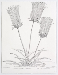 Ellen Kahn Botanical Works on Paper ?