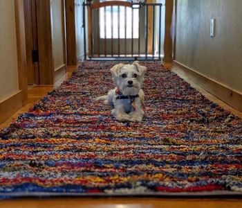 Estambre Studios Dogs on Rugs