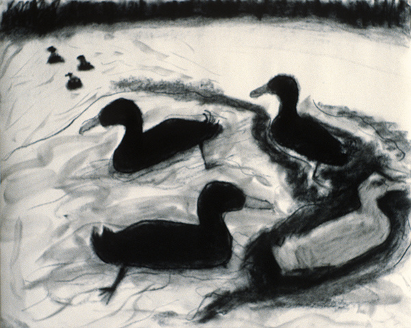 SIXTY-SIX DRAWINGS 1980's Four Ducks (Three Black, One White)