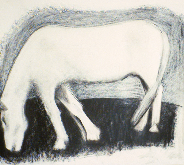 SIXTY-SIX DRAWINGS 1980's The Paul Strand Horse