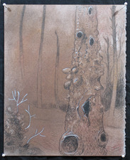 Gabrielle Barzaghi                     DRAWINGS Knarly Trees (2013) Dry Pigment, Graphite, Gouache