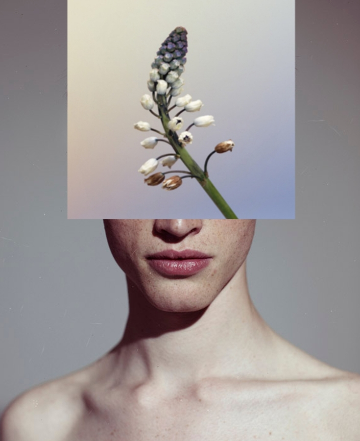 Digital Files of Artists David Marinos - Flower 100cm x 80cm Collage, Photography 2013