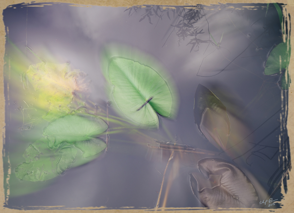 Digital Files of Artists Chip Perone, Green Leaves, 11 x 14, digital photo, 2015