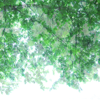 • UNTITLED TRANSPARENCIES untitled transparencies, tree canopy 1