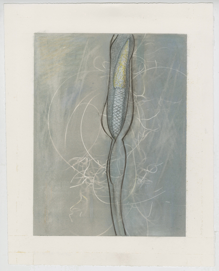 work on paper 2011-2013 Palm Threads[ Elephant Ear