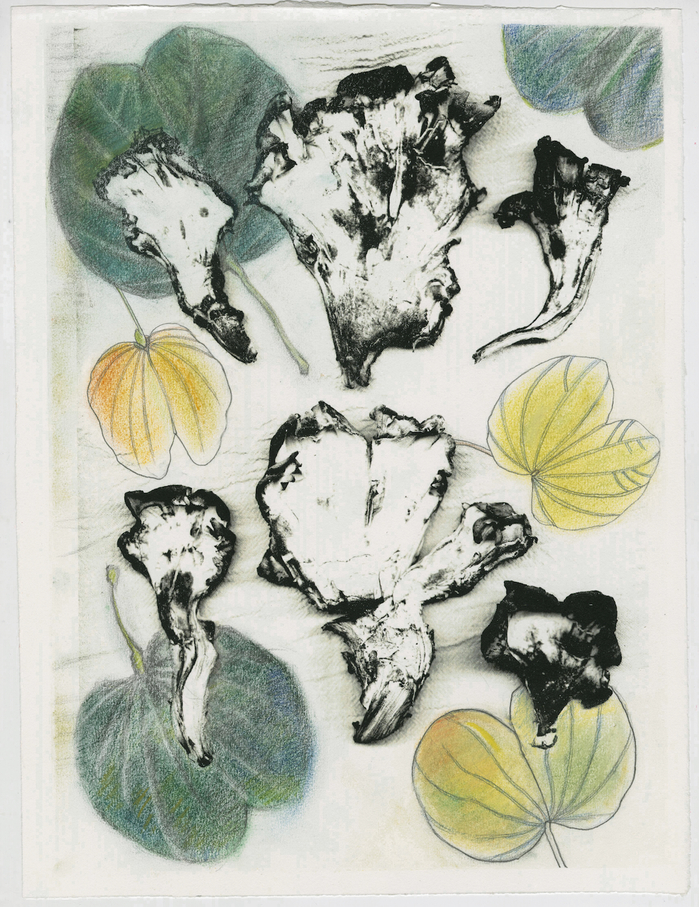 work on paper 2011-2013 Black Staining Polypore Orchid Tree Leaves