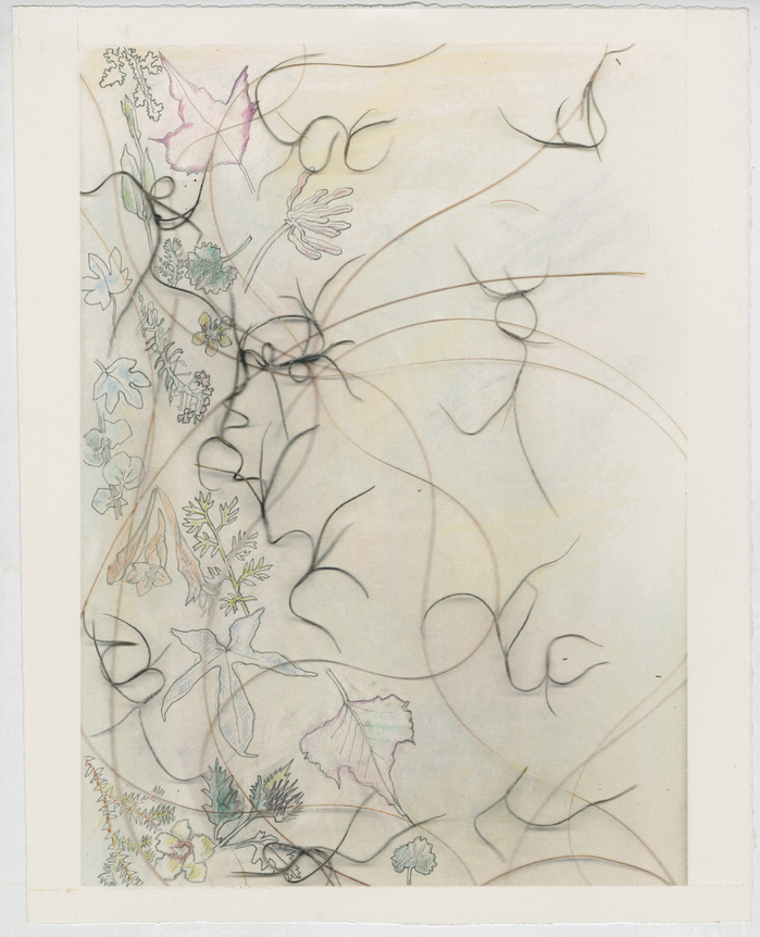 work on paper 2011-2013 Spanish Moss, Palm Threads, Garden