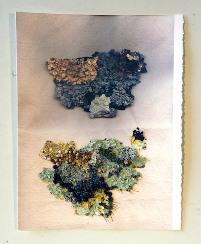 work on paper 2016 Lichen Map