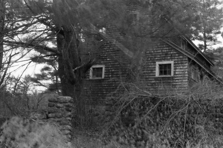 heather sheehan Forced Moulting at the Brooder House  B&W 35mm Film Photography