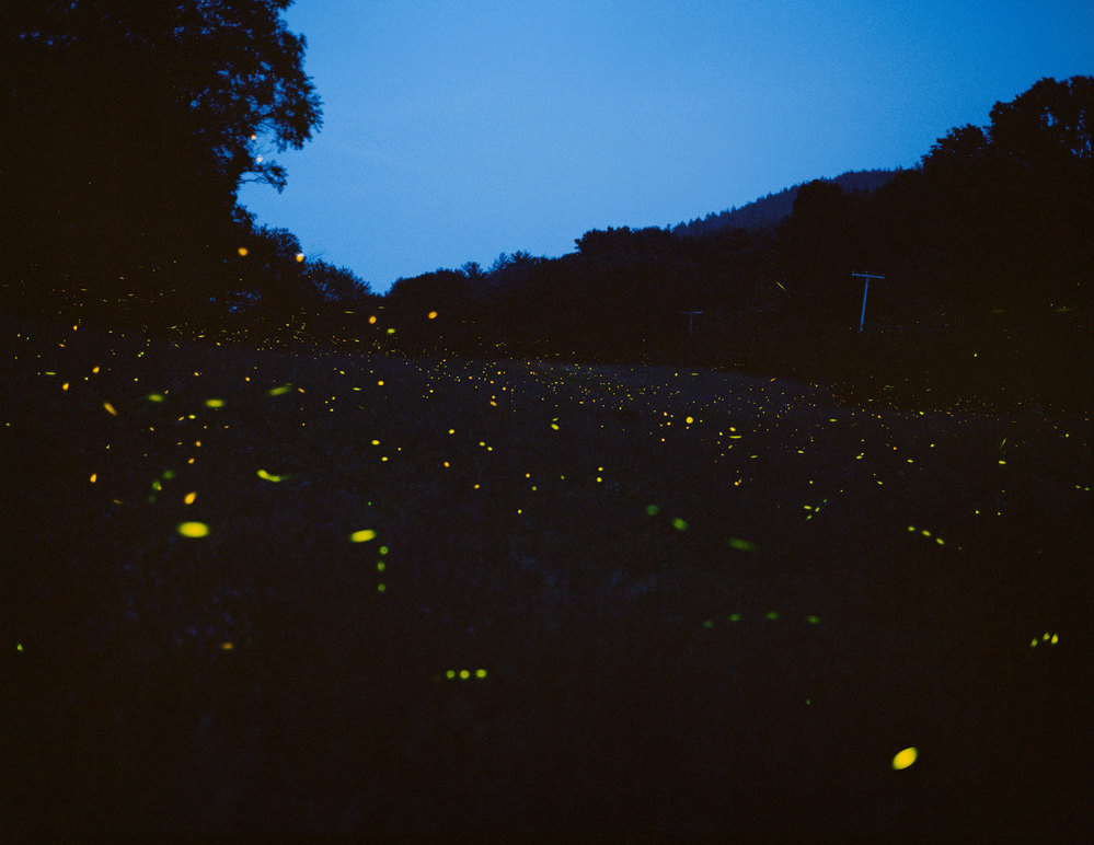 PIONEER VALLEY Fireflies, Massachusetts