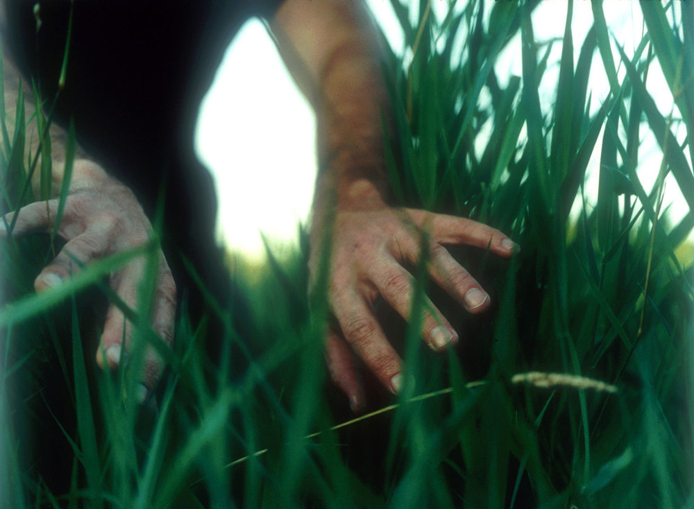 IN BETWEEN Untitled #6 [parting grass], 1998, C-print.