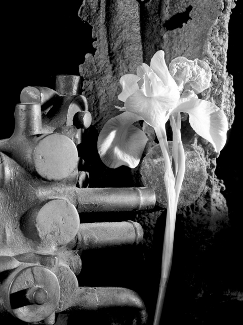 Howard Nathenson Fine Art  Black and White Still Life Photographs B@W photograph