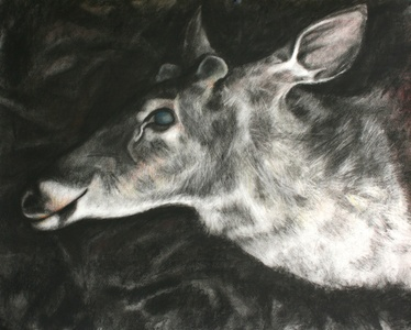 Jackie Skrzynski Deer Roadkill charcoal and colored pencil