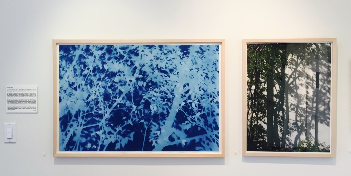Jane Deering Gallery True Blue, and Black | Alternative Photography : Tom Fels & Gail Pine left: Cyanotype . right: digital photograph