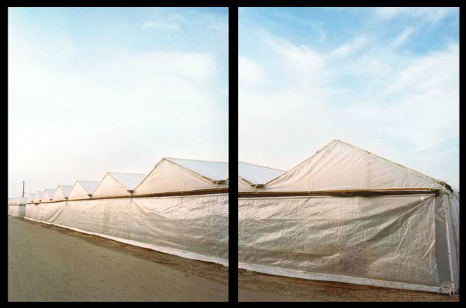 Jane Deering Gallery Selected works by California artists Digital C-print (diptych)