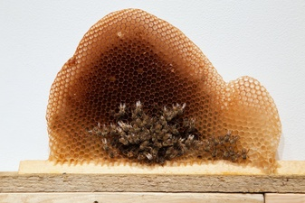 Jane McMahan Collapse Drop Bar with Hive and Bees