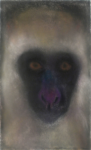 JAN HARRISON The Corridor Series - Primates/Birds 2009-2011 Charcoal, pastel and ink on rag paper