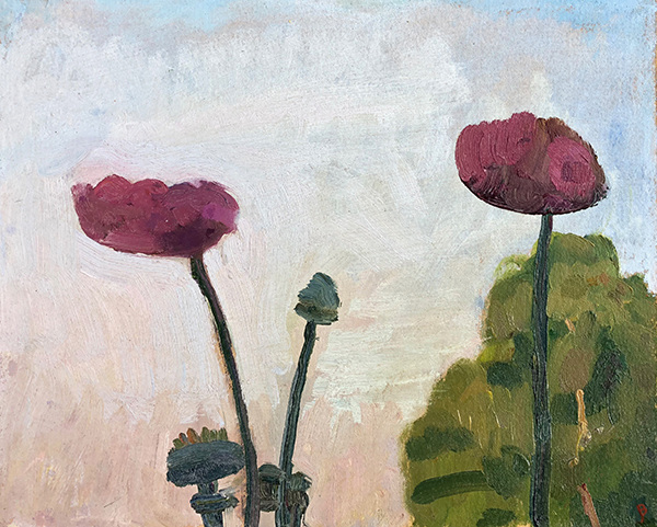 CHATWOOD 2018 Poppy Study, Evening