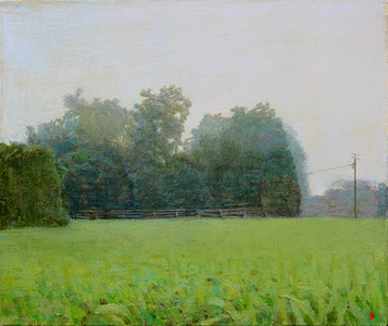 Six-Acre Parcel Looking East, Summer Morning Mist