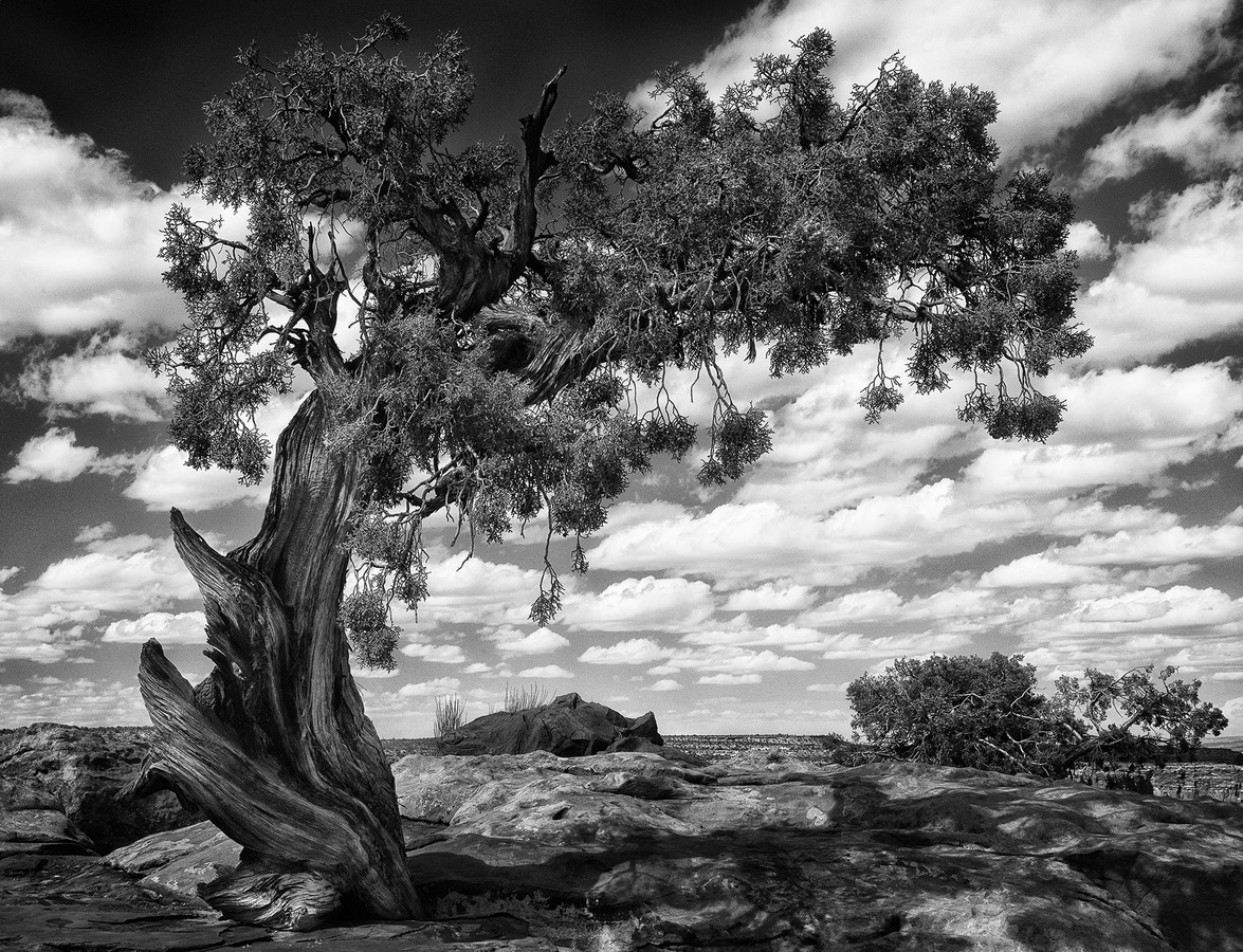 Landscapes Gallery Dancing Tree  ©