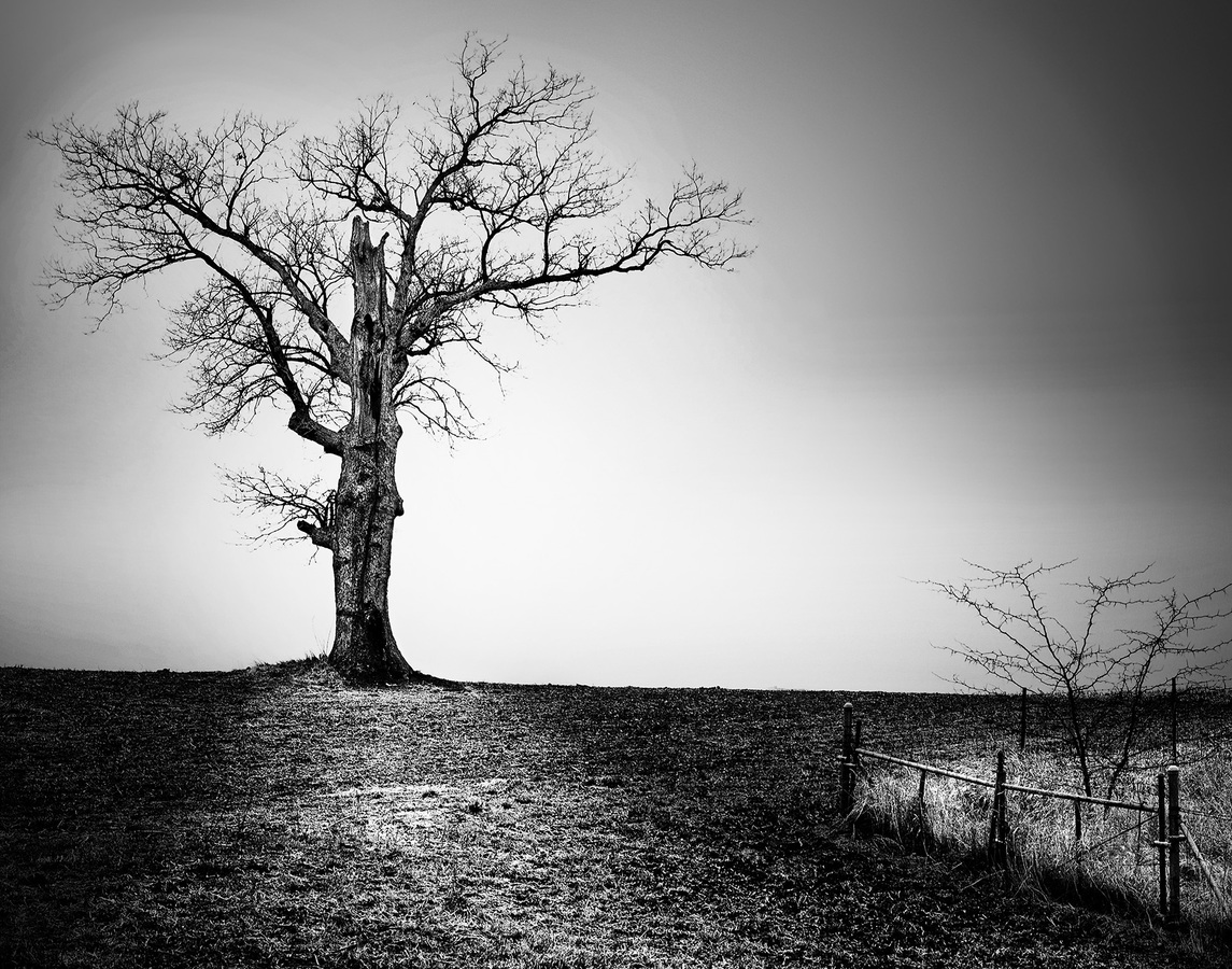 Landscapes Gallery Winter Tree  ©